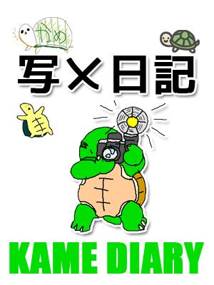 亀日記(写メ日記)